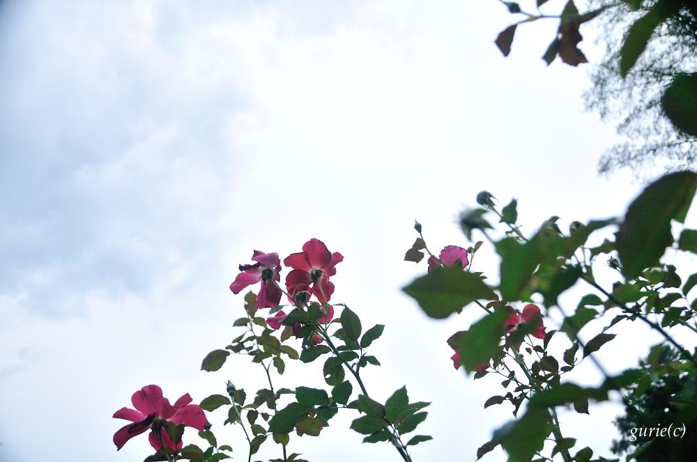 20140824_18.jpg